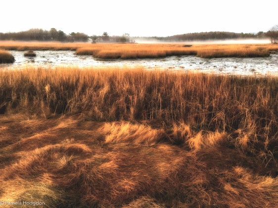 Morning on the marsh at Rye, NH.